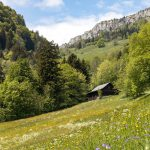 pasture, jura, mountains